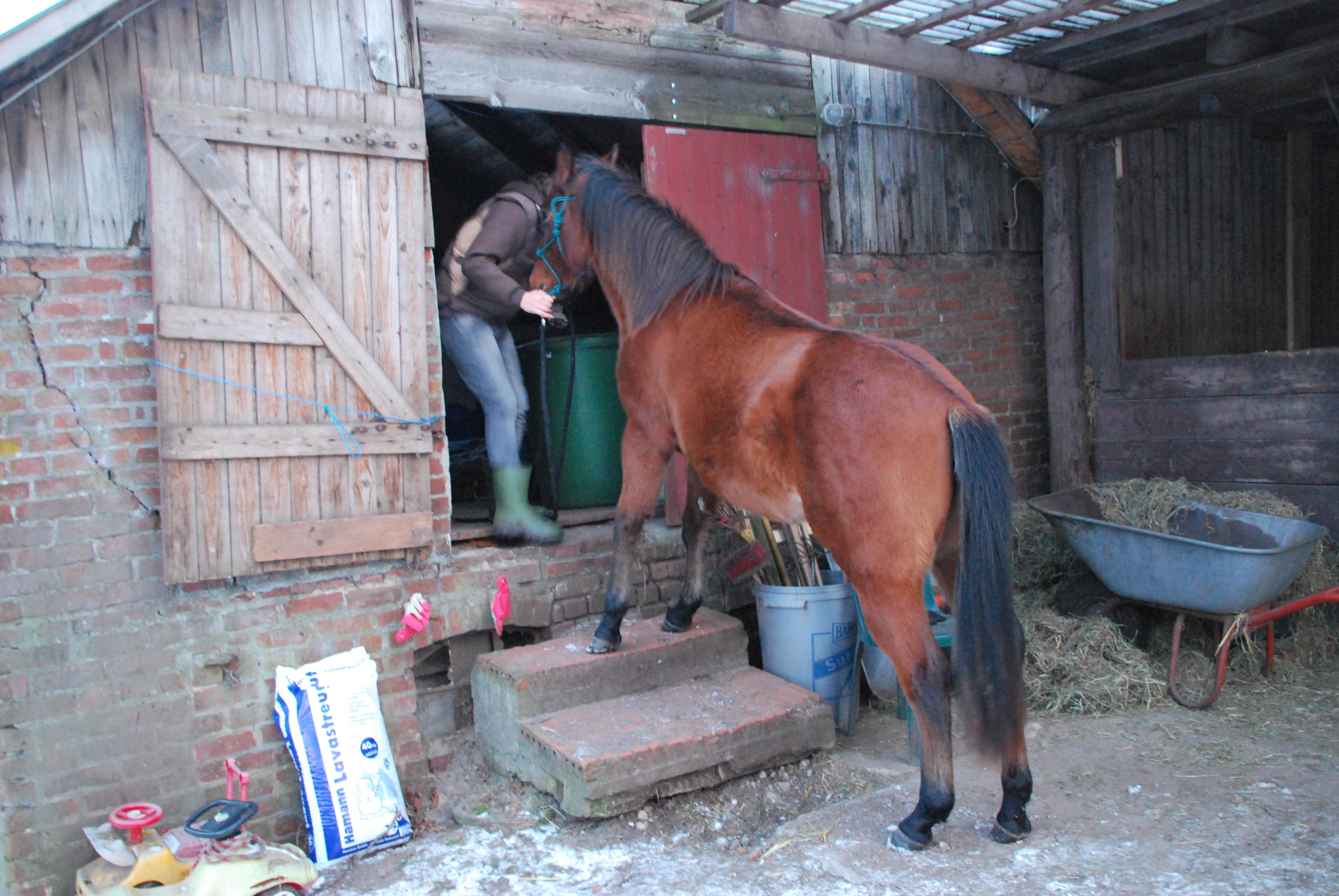 Ein kleines Pferd entdeckt die Winterwelt