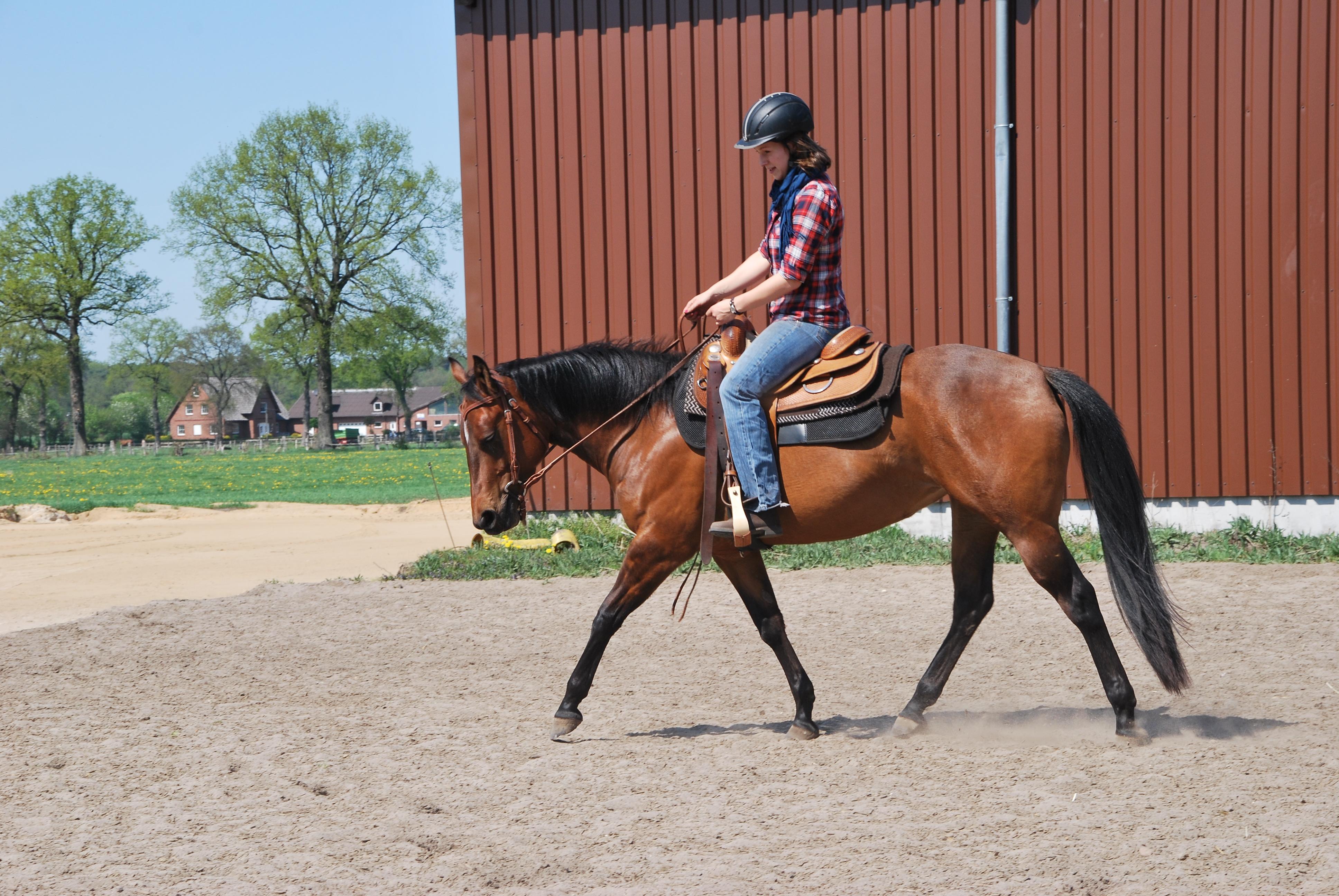 JM Ready to Ride – Diva wird Reitpferd