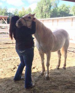 Tief berührt und nachhaltig bewegt: Pferdemassage á la Masterson