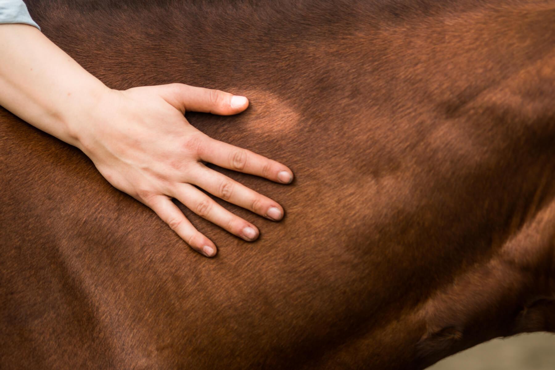 Wie trifft man gute Entscheidungen für sein Pferd?