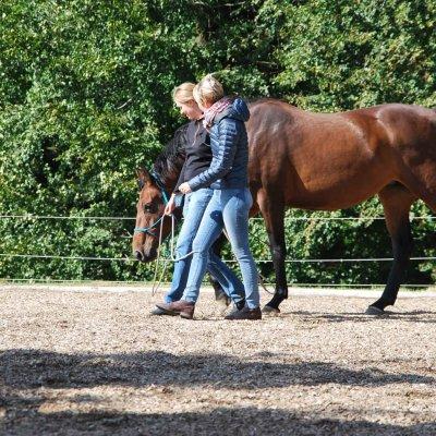 Anna Marciniak - Entspannung für Pferd und Mensch