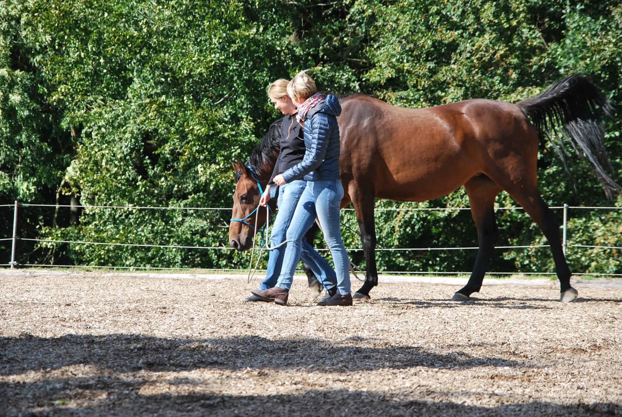 Anna Marciniak – Entspannung für Pferd und Mensch
