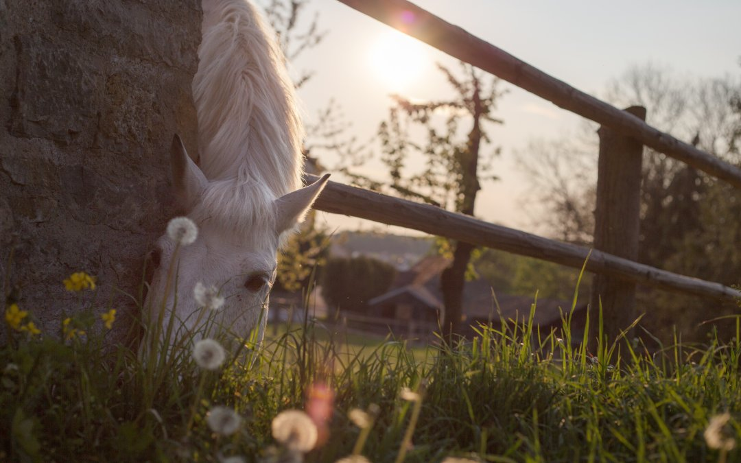 6 Dinge, die Pferdemenschen jetzt gut tun
