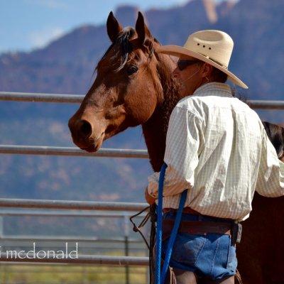 """""""Wir müssen die Pferde verstehen lernen"""" – Interview mit Mark Rashid"""