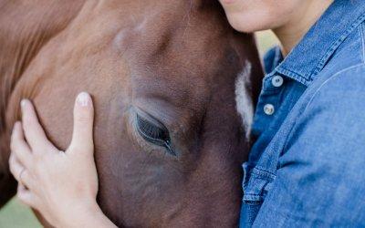 Freundschaft mit Pferden!?